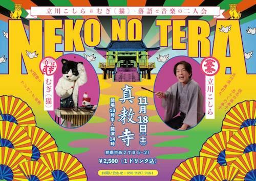 11月18日よる猫の寺